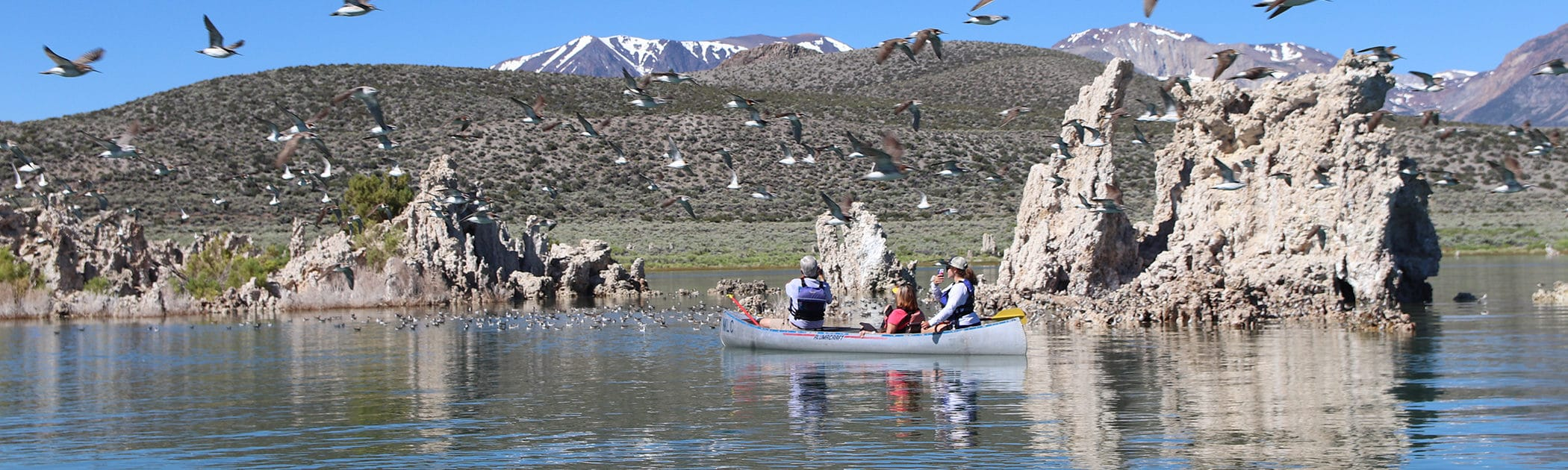 Three people are sitting in a metal canoe on Mono Lake in front of some tufa towers sticking up out of the water and the canoers are looking at a flock of shorebirds in front of them and also flying around them and into the foreground of the photo, with snow capped peaks in the background.