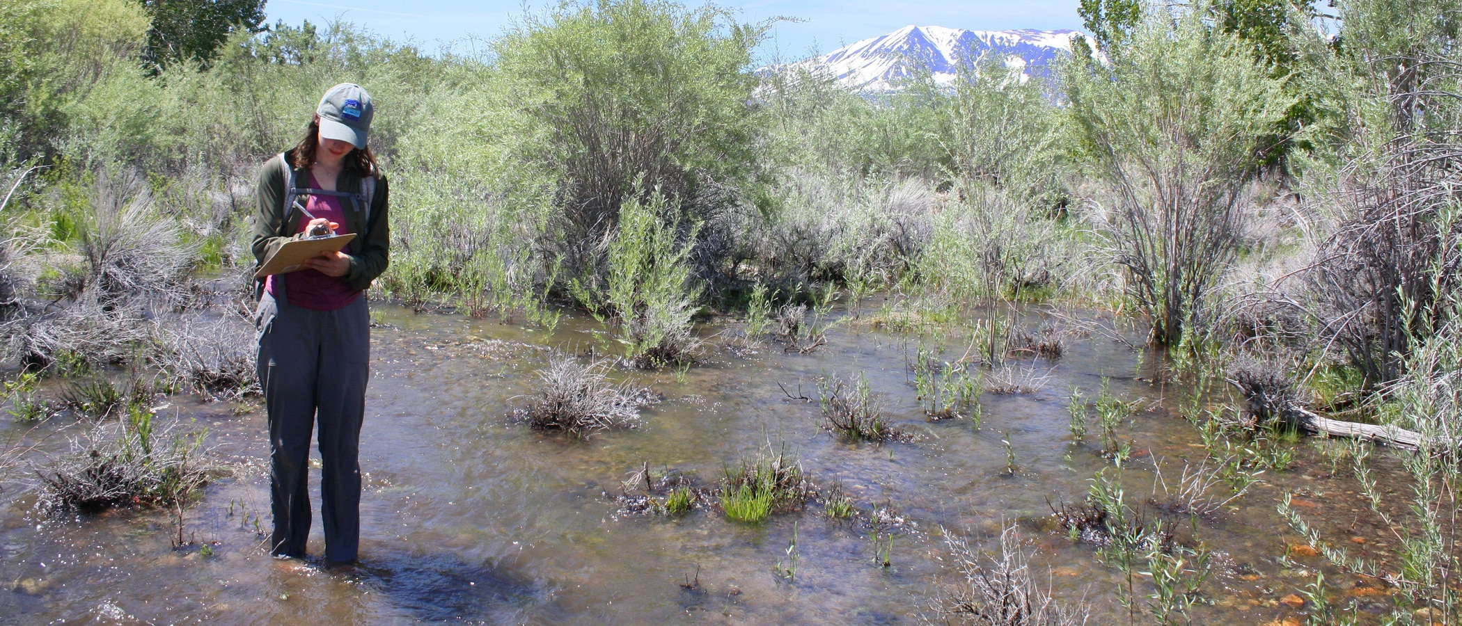 Person standing in a flooded stream up to her shins while she's holding a clipboard taking notes with lush willows around the creek and snow-capped peaks in the distance.